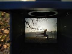 About tentacles / O mackach (Piotr Skiba) Tags: świerklaniec park poland tentacles sun pond bench silhouette backlight
