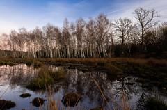 kväll i Hultsby januari björkar (kellanderjonas) Tags: sunset birch pole sky canonshot kellanderjonas
