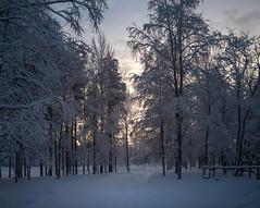 Forêt boréale