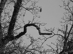 Omega (Tricia H C) Tags: monochrome blackandwhite tree branch symbol omega nature outdoor outside