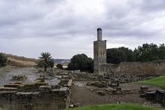 Chellah the Necropolis and Ruins of an Ancient Roman Outpost Rabat Morocco 04 (Barbara Brundage) Tags: chellah necropolis ruins an ancient roman outpost rabat morocco 04