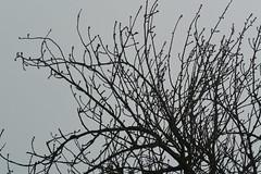 DSC_3250 (roland) Tags: zurich notsunny cloudy clouds fog foggy nikon1v2photo nikon1v2 rolandtanglaophoto nikon30110mm