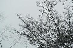 DSC_3251 (roland) Tags: zurich notsunny cloudy clouds fog foggy nikon1v2photo nikon1v2 rolandtanglaophoto nikon30110mm