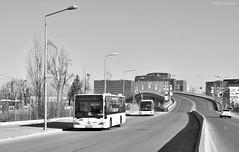 Mercedes-Benz Citaro Euro 3 - 4479 + Mercedes-Benz Citaro Euro 4 - 4985 - 25.01.2020 (VictorSZi) Tags: romania bucharest bucuresti bus autobuz transport publictransport stb mercedes mercedescitaro mercedesbenz citaro mercedescitaroeuro4 mercedescitaroeuro3 pipera winter iarna ianuarie january nikon nikond5300