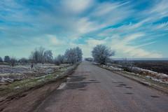 IMG_8130 (gidlark) Tags: ukraine road asphalt trees tree sky clouds cloud frost luminar4