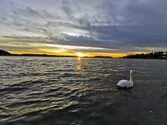 25.1.2020 sunset with the shiny white swan (jGshah87) Tags: sunset 25th norway norge swan