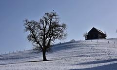 Toggenburg (Bergwandern Alpen) Tags: toggenburg baum tree winter schnee snow stall barn winterlandschaft winterlandscape schneelandschaft snowscape zaun fence