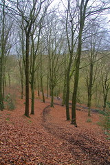 Moss Valley (Paul Bagshaw) Tags: woodland winter beech trees people walkers leaves leaf path fallen daytime nature countryside canon uk derbyshire ridgeway