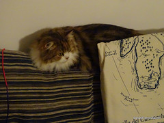 Q1251556 DSC05477 (pierino sacchi) Tags: casalamborghini casa cat cats ellie gatta gatto lamborghini