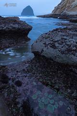 Tide Pool Flow (Mike Berenson - Colorado Captures) Tags: anemone beach cannonbeach coast haystackrock nature ocean oregon pacific shore water waves