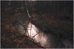 (no49_pierre) Tags: landscape 35mmfilm earlymorninglight winterseries