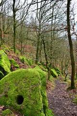 Mossy millstone (LMW76) Tags: peak district derbyshire moss mossy green millstone path frogatt