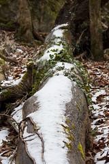 Lainbachfall / Kienstein (johannes243) Tags: steinbock voralpen winter wasser wasserfall berge eis wald kochel wildtiere lainbach lainbachfall kienstein