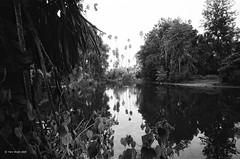 pond (markjwyatt) Tags: california monochrome bw film analog zeissikoniia ilford fp4 voigtlanderscskopar21mmf4 losangelesarboretum arcadia pond light shade trees leaves water shadow palms