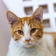 joey25Jan202027.jpg (fredstrobel) Tags: pawsatanta atlanta places pets animals ga usa pawscats cats decatur georgia unitedstatesofamerica