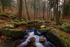 Steinerne Renne @ Winter III (Adrian Siebert) Tags: wald wasser winter wernigerode bäume steine felsen eis moos