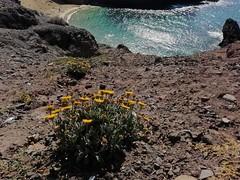 Lanzarote (denismartin) Tags: denismartin islascanarias lanzarote papagayo playapapagayo beach geology volcano