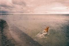 Dog Water Fun | 3. September 2013 | Fehmarn - Schleswig-Holstein - Deutschland