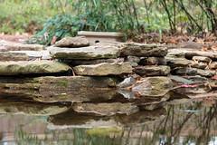 Pond at Miyzaki Japanese Garden 2 (Puddin Tain) Tags: nikon nikond850 d850 virginiabeach miyazakijapanesegarden japanesegarden redwingpark pond stones water