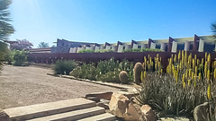 Cactus Garden (jrpopfan) Tags: scottsdale summer exploreeverthing traveling desert travel statue exploration iphone architecture taliesinwest wanderlust franklloydwright summersun arizona