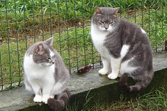 189 (bluefootedbooby) Tags: gatto cat chat gato