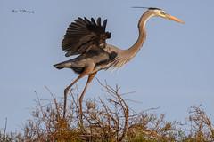 I,m done with this (Mike_FL) Tags: imdonewiththis nikon nikond7500 nature bird wakodahatcheewetlands wildlife wetlands tamron100400 florida floridawildlife floridabirdingtrail photograph park image