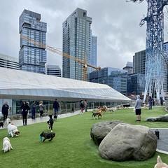 고양이판 vs 개판 #cats #dogs #dogpark #seattle (Seattle Raindrops) Tags: cats dogs dogpark seattle