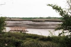 Roadtripping Texas Coastline (jrpopfan) Tags: rebelt3 photograph texas corpuschristi nature photography botanicalgarden livetexan swamp