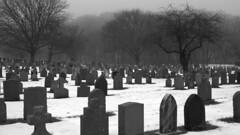 IMGP5040 -1crpvibfwlconbwfwlcon (citatus) Tags: winter toronto canada cemetery fog hope afternoon pentax foggy mount 2020 bw ii k1 snow tombstones gravestones trees