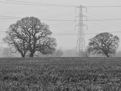 3 Elements (rrlammas) Tags: trees pylons countryside fog mist weather black white atmospheric moody mono fields farmers field