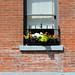 Windows on Montréal
