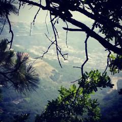 Peeking Through The Trees (jrpopfan) Tags: mexico citylife monterrey urban landscape travel city vacation landscapes international exploration