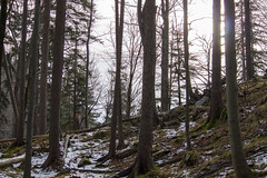 Lainbachfall / Kienstein (johannes243) Tags: voralpen steinbock wildtiere kienstein lainbach lainbachfall wasser winter eis wasserfall kochel berge wald
