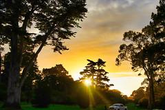 Golden (axiezai) Tags: park dawn sunset tree california scenery lowlight green golden sun