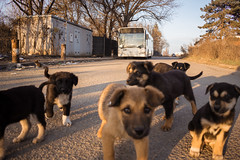 DSC_0047 (WT_fan06) Tags: mercedes benz citaro euro3 ratb stb bucharest bucuresti romania photography nikon d3400 cityscape landscape urban street decay dslr 4311 dogs puppies animals curious