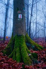 (formwandlah) Tags: kaiserslautern wald forest nature tree fog nebel mist foggy rinde structure mysteries pfälzerwald germany natur baum bäume fuji xt20 27mm