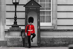 """Prendre une garde """"Au pied levé"""" / Take guard """"Off the cuff"""" (Thierry De Neys - Photographies) Tags: thierrydeneys londres london guard scotguard uniforme uniform guérite gardeàvous dynamisme garderoyalebritannique britishroyalguard policeguard scotsguards welshguards grenadierguards coldstreamguards irishguards plumet bonnetpoildours"""