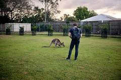 Dan and a kangaroo (ian.crowther) Tags: lonepinekoalasanctuary brisbane australia figtreepocket queensland dan kangaroo photography