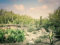 Botanical Garden in Corpus (jrpopfan) Tags: sculpture photograph texas corpuschristi nature photography statue swamp g16 botanicalgarden livetexan art