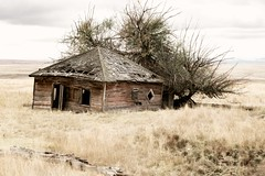 Woebegone (garshna) Tags: oregon abandoned ruins homestead sky window door field tree brush