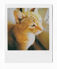 Squeeker (scottboms) Tags: instantfilm polaroid polaroidoriginals film analog california cats family