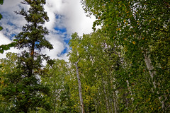 A View with Forest All Around and Blue Skies Above (Chena River State Recreation Area) (thor_mark ) Tags: alaska2019 alaskaintermountainranges alaskayukonranges angelrockstrail azimuth116 blueskies bluesskieswithclouds chenariverstaterecreationarea day3 dxophotolab2edited eastcentralalaska hillsideoftrees imagecapturewitharsenal landscape lookingse lookingup lookingupatsky lookingupatskythroughtrees lookingupatskythrutrees lookinguptosky nature nikond800e northfairbanksarea outside partlycloudy portfolio project365 rollinghillsides sunny talltrees talltreesallaround trees witharsenal chenariverstaterecreationare alaska unitedstates
