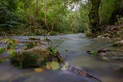 Río Escanela (_dingrid) Tags: rio piedra agua arboles queretaro mexico