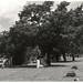 Oakwood Tree.jpg