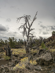 (Brian Collins Photography) Tags: bc briancollins brianjamescollins cratersofthemoon idaho lava nationalmonument seizethelight volcano erie ih8nyyanks usa