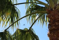 January 25, 2020 (4) (gaymay) Tags: california desert gay love palmsprings riversidecounty coachellavalley sonorandesert airplanes propplane flying