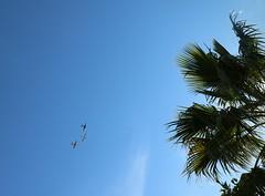 January 25, 2020 (9) (gaymay) Tags: california desert gay love palmsprings riversidecounty coachellavalley sonorandesert airplanes propplane flying