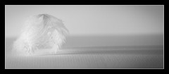 feathers (1 of 1)-2 (ianmiddleton1) Tags: feathers closeup hss sliderssunday panorama mono monochrome