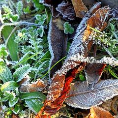 Givre (Raymonde Contensous) Tags: paris lacdaumesnil glace gel nature boisdevincennes herbe givre plantes
