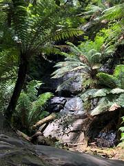 Tarra Bulga Nat. Park. (kram cam) Tags: australia roadtrip newsouthwales victoria beach photo digital iphone